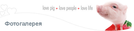 About THE PIG love pig love people love life